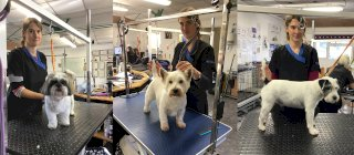Country Paws Dog Grooming Services